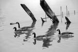 Reflections Nyack NY