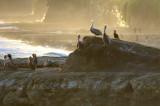 Pelican Natural Bridges