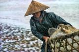 Woman Vietnam II