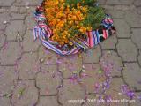 marigolds, san lucas toliman, guatemala