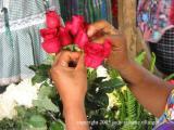 flower, antigua, guatemala