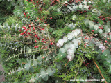 12.22.07 eucalyptus wreath
