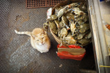 Cat and Crabs