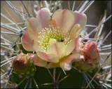 4880 Cactus.jpg