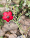 6196 Wildflower id.jpg