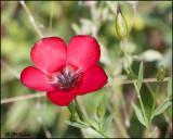 6197 Wildflower id.jpg