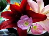 My Lily Garden