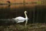 SwanWM.psd