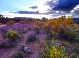 entre Moralzarzal y Becerril de la Sierra