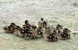 20110726 BBWD Chicks  _6815