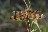 20111023 Halloween Pennant Dragonfly pb _0701.jpg
