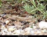 2010-06-11 Mesa Verde Colorado 157.JPG