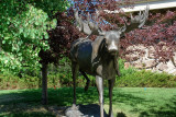 DSC02636 hdr  Buffalo Bill Museum Cody Wy R1.jpg