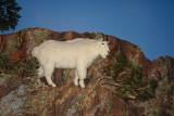 DSC02638  Buffalo Bill Museum Cody Wy R1.jpg
