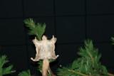 DSC02641  Buffalo Bill Museum Cody Wy R1.jpg