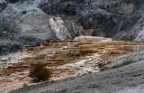 Geyser DSC03015 hdr Yellowstone   R1.jpg