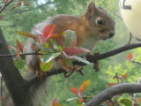 A Squirrel In Our Yard