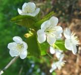Spring Flowers 1