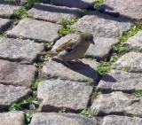 Sparrow ..
