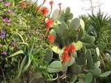 Cacti , Aloes And Other Plants..