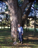 Tom Lawrence and his 200-year-old walnut tree . . .