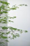 Lim Yaohui_reLYH_3836.jpg