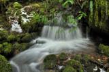 Hidden Creek on mossy lane