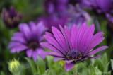 Purple flower power!