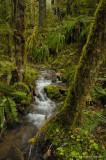 Small stream up big fall creek road