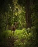 Deer on kelly butte