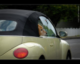VW dog, a new breed of back seat drivers!