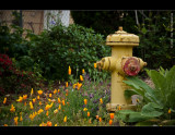 Spring flowers and a fire hydrant