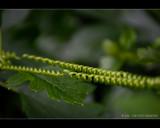 Spring loaded leaf