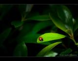 Ladybird in the light