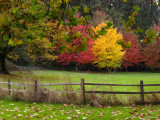 Autumn color at Skinner butte park