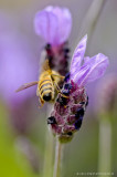 Bee stepping over