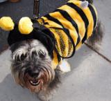 Honeybee Pooch