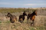threehorses.jpg
