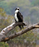 900.osprey.5460.jpg