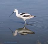 Southern California, Birding Trip, 2011