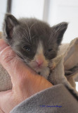 Cathy found a ten day old kitten at Fresh Pond