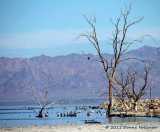 Salton Sea and Denizens
