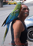 Macaw and Friend in Julian, CA