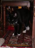 Rocky stalking a new toy