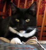 My Rosie Kitty