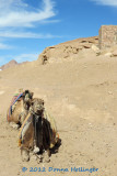 Camels Waiting En Route To St. Catherine's Monastery