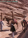 Bedouins with Camels