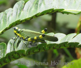 Mother GH -Yellow and Green Grasshopper on a Neat Fern
