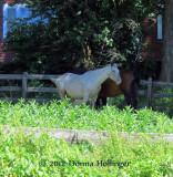 Horse Pals