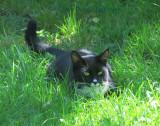 Jimi in the grass